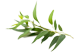 Aridrich_Aromist_Airsan_Eucalyptus